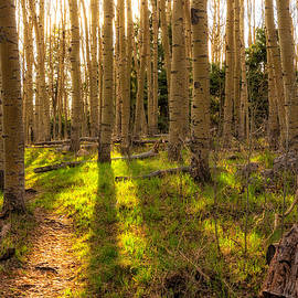 Brian Harig - Windsor Trail at Dusk - Santa Fe National Forest New Mexico