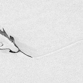 Alan Brown - Windswept Leaf