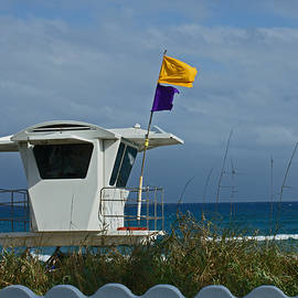 Windy West Palm by Maria Keady