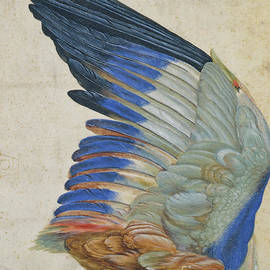 Wing of a Blue Roller - Hans Hoffmann