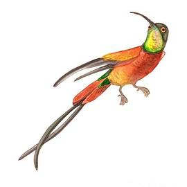 Winged Jewel 6, Watercolor Tropical Rainforest Hummingbird Red, Yellow, Orange And Green by Audrey Jeanne Roberts