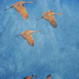 Flying Z Photography By Zayne Diamond - Wings of the Ancient, Sandhill Cranes