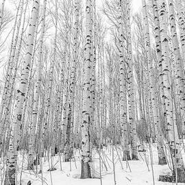 Eric Glaser - Winter Aspens