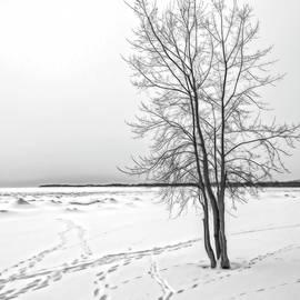 Winter Beach Tracks by Phill Doherty