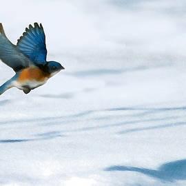 Steve Karol - Winter Blues