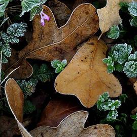Winter Bouquet by Bill Morgenstern