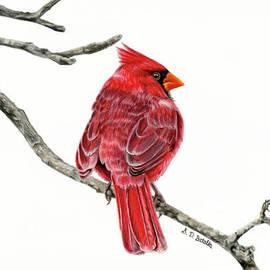 Winter Cardinal On White by Sarah Batalka
