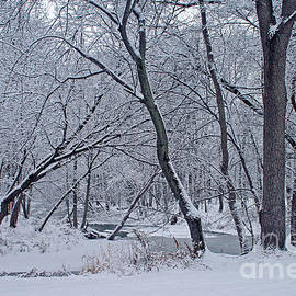 Kay Novy - Winter Days Along The Creek