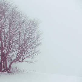 Tim Kirchoff - Winter Evening