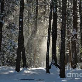Neal Eslinger - Winter Falling Snow at Bigelow Hollow State Park