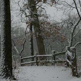 Winter Fence Trail by Dylan Punke