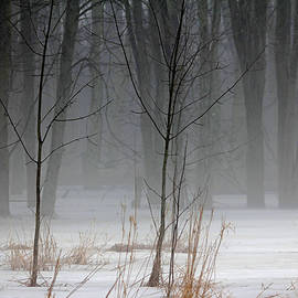 Debbie Oppermann - Winter Fog