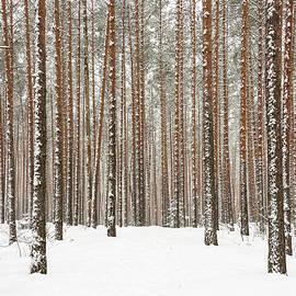 Sergei Dolgov - Winter forest