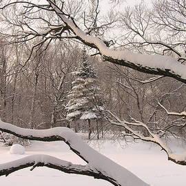 Maxim Mazur - Winter garden