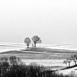 Winter Gray by Brenda Conrad