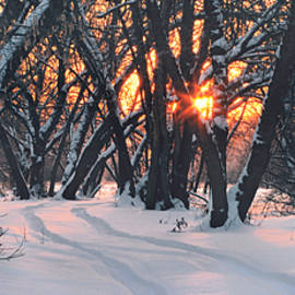 Stanislav Salamanov - Winter in forest