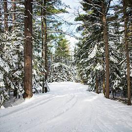 Frani Smith - Winter in Michigan