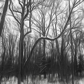 Winter In The Woods by Phill Doherty