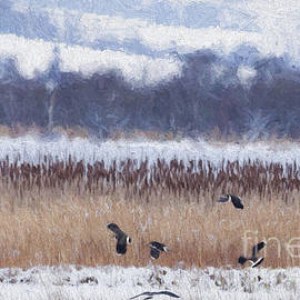 Liz Leyden - Winter Lapwings