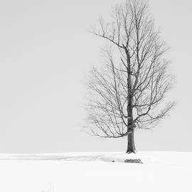 Alan Brown - Winter Maple