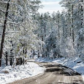 Saija Lehtonen - Winter Morning
