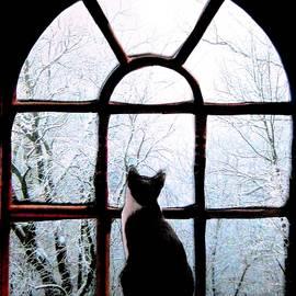 Angela Davies - Winter Musing