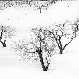 Alan Brown - Winter Orchard