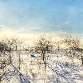 Joann Vitali - Winter Orchard - Vermont Farm