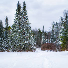Alan Brown - Winter Path