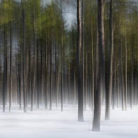 Alan Brown - Winter Pine Abstract