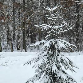 Stephanie Hanson - Winter Pine