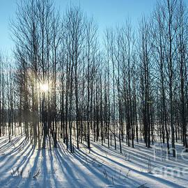 Winter Shadows - Grand Teton National Park