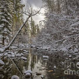 Mitch Shindelbower - Winter Stream
