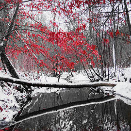 Winter Stream by Parker Cunningham