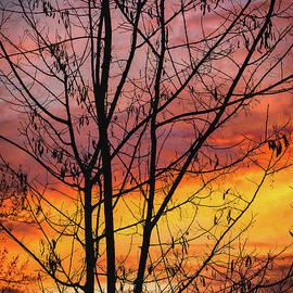 Mitch Shindelbower - Winter Sun