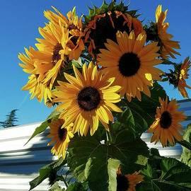 Angela J Wright - Winter Sunflowers