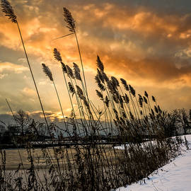 Winter Sunrise Through The Reeds - Square by Chris Bordeleau