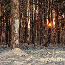Tatiana Travelways - Winter sunset in the forest