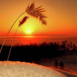 pixabay - winter survival