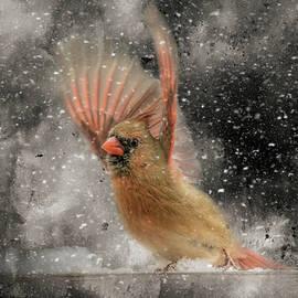 Winter Take Off Songbird Art by Jai Johnson