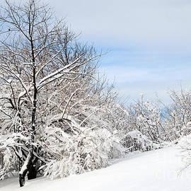Winter Tranquility by Regina Geoghan