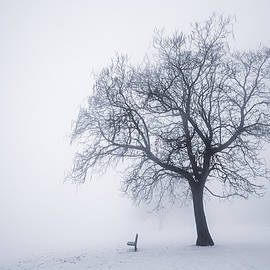 Elena Elisseeva - Winter tree and bench in fog