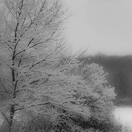 Winter Tree by Francisco Gomez