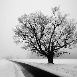 Winter Tree by Tim Kirchoff