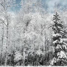Elizabeth Regan - Winter Trees