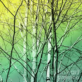 Margaret Koc - Winter trees in color