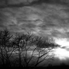 Phil Rispin - Winter Trees
