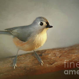 Darren Fisher - Winter Tufted Titmouse