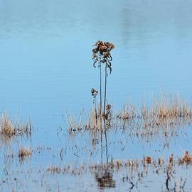 Maria Urso - Winter Wetland