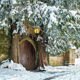 Winter Yews in Stow on the Wold - Tim Gainey